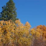 Our area enjoys the stunning contrast of evergreen and deciduous trees.